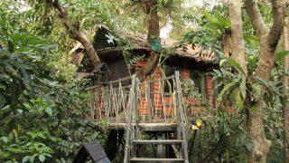 ジャングル大帝レオすぎる!カオソックの「ツリー・ハウス」