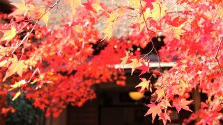 旅のノートに恋ヘタな抒情詩!京都・嵯峨野「直指庵」へ寂聴観光旅行