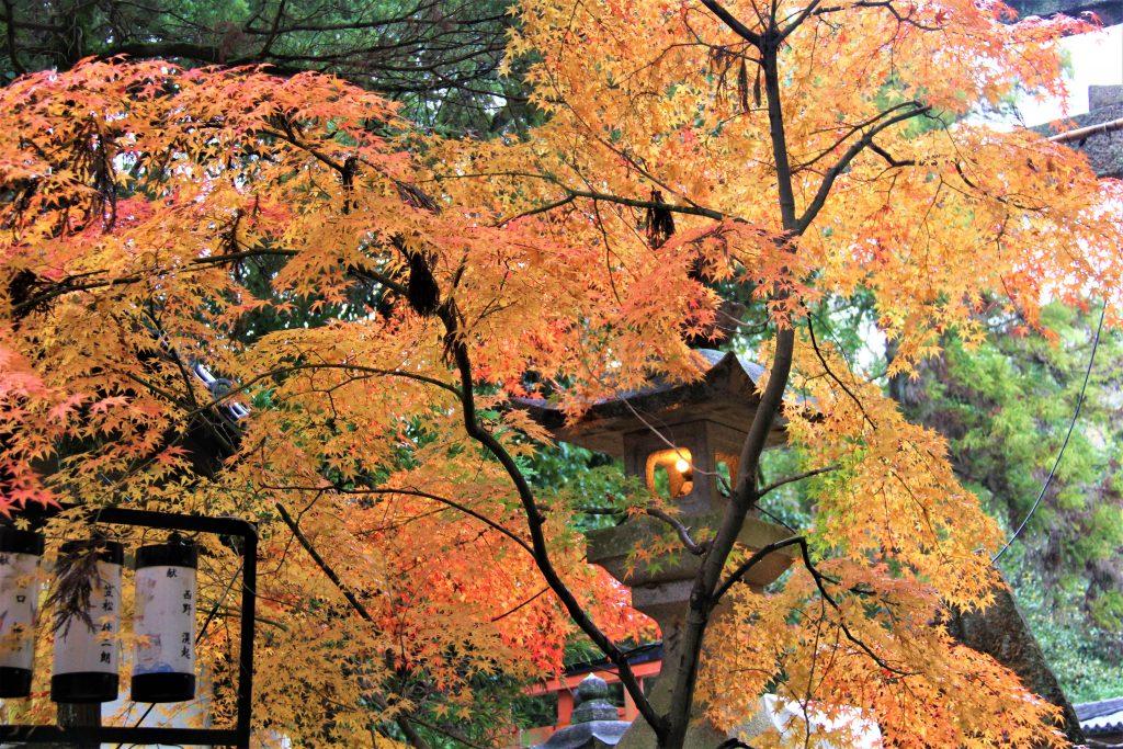 理想の上司 聖徳太子 ミカン狩り 古墳 観光 大阪 太子町 小野妹子 上の太子観光みかん園 二上山 竹内街道 推古天皇 孝徳天皇 近つ飛鳥博物館