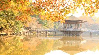 秋の奈良観光!紅葉名所&穴場スポット!紅葉時期・見ごろは?