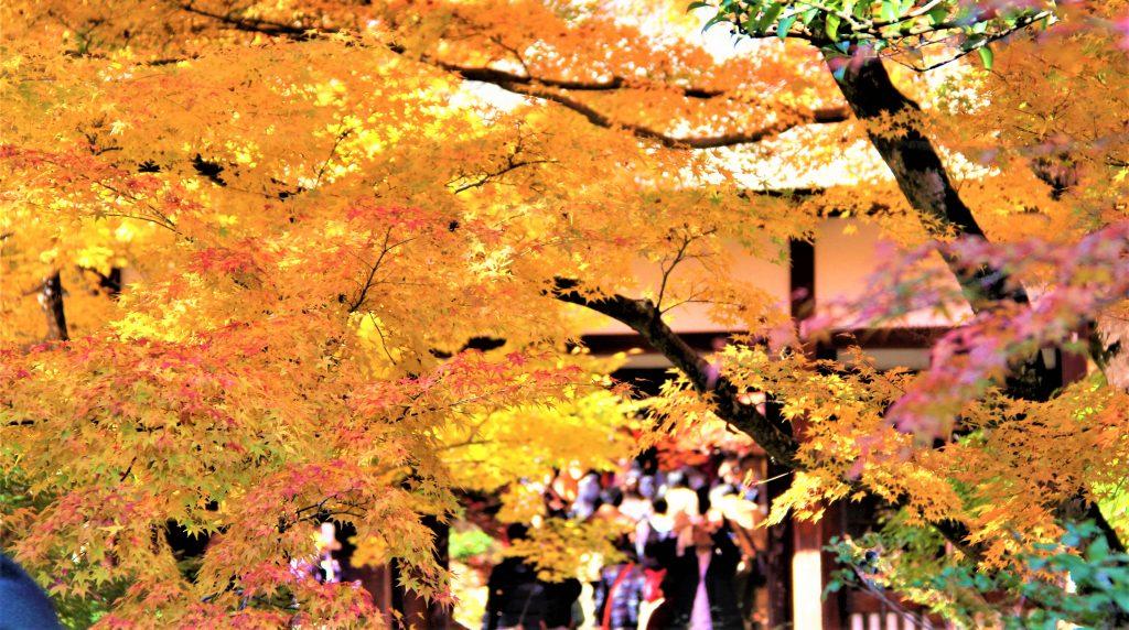 京都 嵐山 嵯峨野 散策 コース おすすめ 観光 スポット 巡り 天龍寺 野宮神社 常寂光寺 二尊院 大覚寺 化野念仏寺 直指庵 竹林の道 トロッコ列車