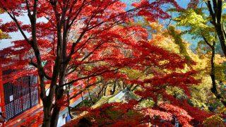 初心者も安心!京都おすすめ!人気観光ハイキングコース5選