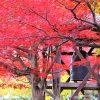 京都・嵐山~嵯峨野散策コース!おすすめ観光スポット巡り